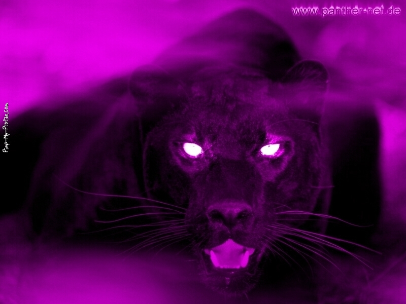 purple panther facebook timeline cover backgrounds