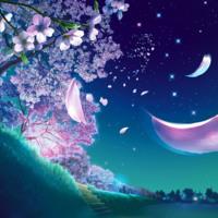 Blooming Trees & Petals
