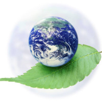 Earth Day Green Leaf
