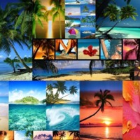 Tropical Paradise Collage