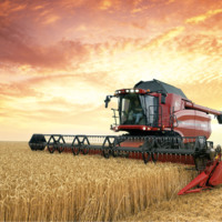 International Harvester in Wheat Field