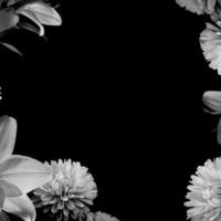B&W Lilies & Chrysanthemums