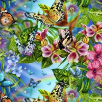 Butterflies & Flowers
