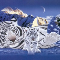 White Tigersess & Cub in Mountains