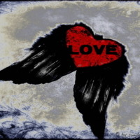 Love Heart with Black Wings
