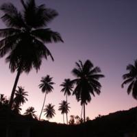 Lavender Palm Tree Sunrise