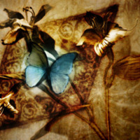 Blue Butterfly in Sepia