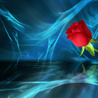 Red Rose on Blue