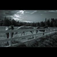 Horses in Peace