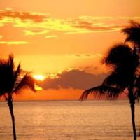 Orange Palm Tree Sunset