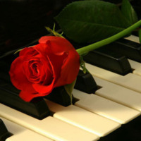 Red Rose & Piano Keys