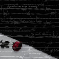 Barbed Wires & Rose