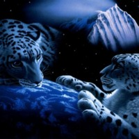 Snow Leopards Drawing