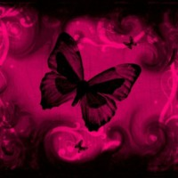 Hot Pink butterflies