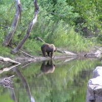 Bear on River's Edge