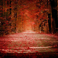 Autumn Road in Red