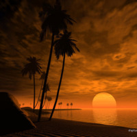 Brown Tropical Sunset