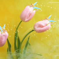 Tinkerbell Tulips