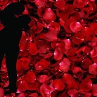 Rose Petals & Love