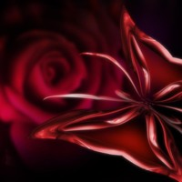 Red Rose & Butterfly