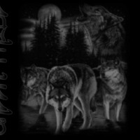 Wolves in Black & Grey