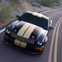 Black & White Mustang