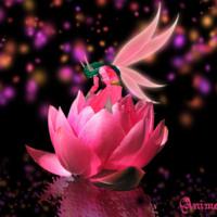 Pink Lotus Fairy