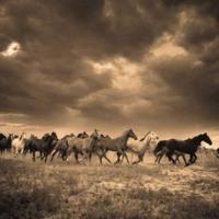 Wild Horses in Sepia