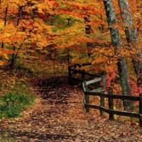 Fall woods path