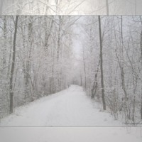 Snowy Road Through Woods