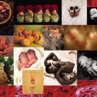 Anne Geddes Baby Collage