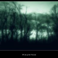 Dark Haunted Forest