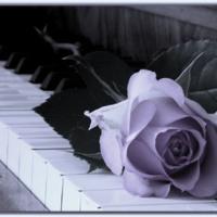 Rose on Piano Keys
