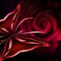 Red Butterfly Rose