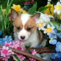 Puppy in Flowers