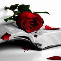 Red Rose, Blood & Book