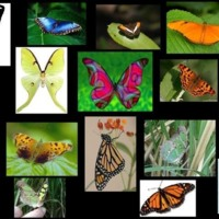 Colorful Butterfly Collage