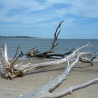 Beachy Driftwood