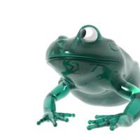 Teal Glass Frog