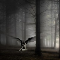 Dark Angel in Woods