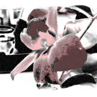 Negative of Pink Flower