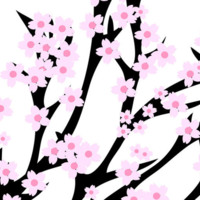 Sakura/Cherry Blossoms