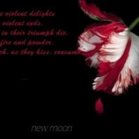 New Moon Tulip