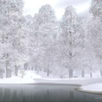 Snowy White Woods
