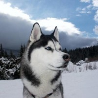 Husky in Mountains