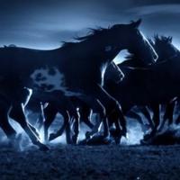 Wild Horses in Blue
