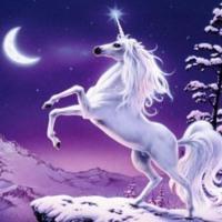 Midnight Unicorn in Snow