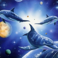 Outerspace Dolphins