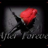 After Forever Red Rose