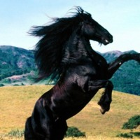 A Black Beauty Horse